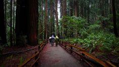 An Adventure Through Muir Woods