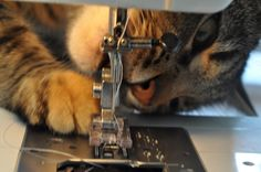 Kitty trying to eat the sewing machine | Improv Diary
