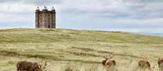 Deer in front of The Cage at Lyme Park, House and Garden (c) National Trust Images/Arnhel de Serra