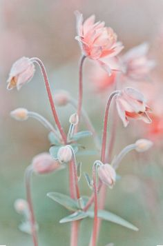 Pale pink and green flowers inspiration for interior design colour pairing of 2016 - pale pink and green.