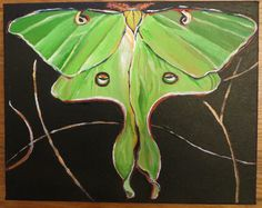 "Luna Moth- 10x8"" by SG Criswell (sold for SH and PB)"