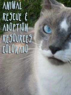 Pet Shelters and Rescue Organizations in Colorado by City