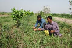 Cultivating a limited number of crops reduced the genetic diversity of plants, endangering harvests. Seed collectors hope to fix it by finding the plants' wild cousins. Global Food Security, National Movement, Green Revolution, Sea Level Rise, Sustainable Farming, Seed Bank, Climate Change Effects, Edible Garden, Genetics