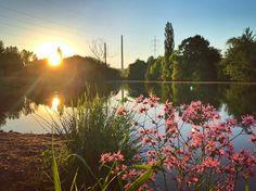 ... nochmal gemütlich am Saalestrand den Sonnenuntergang  genossen! #jena #burgau #sunshine #saale #flower #sonnenuntergang #jenaparadies #moments