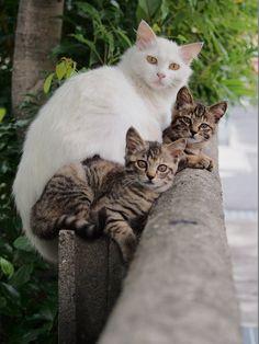 野良の子猫と母猫写真ある程度たまったので適当に貼っていく:ハムスター速報 もっと見る
