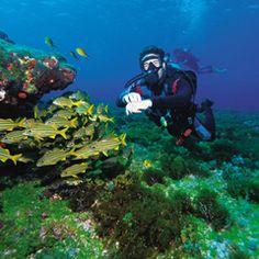 Não precisa prender a respiração: selecionamos 28 destinos brasileiros que reservam uma vida marinha e fluvial surpreendente e que oferecem estrutura para a prática do mergulho ou flutuação com segurança.   Entenda as diferenças    • Mergulho livre: é aquele que não requer cilindros...