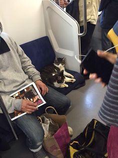 Fabulous! Kitties taking train.