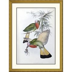 Global Gallery 'Red-Throated Nyctiornis' by John Gould Framed Graphic Art Size: