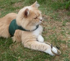 Cat Harness_ Dark Green Homespun Size M by ScotsPlace on Etsy, $18.00