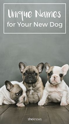 dog names Pin it! Unique Dog Names For Your New Pooch Funny Girl Dog Names, Boy Puppy Names Unique, Unusual Dog Names, Unique Female Dog Names, Cute Girl Dog Names, Puppies Names Female, Dog Names Male, Cute Names For Dogs, French Bulldog Names Girl