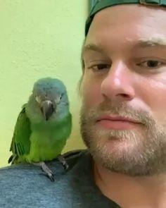 Funny Birds, Cute Birds, Cute Funny Animals, Cute Baby Animals, Animals And Pets, Birds 2, Nature Animals, Farm Animals, Funny Dogs