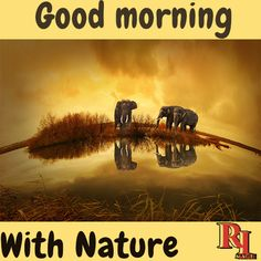 Good morning with nature & elephant Good Morning Nature Images, Hd Images, Elephant, Pictures, Beautiful, Beauty, Photos, Background Images Hd, Elephants