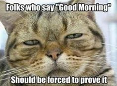 101 Good Morning Memes For Wishing a Beautiful Day For Him & Her Funny Good Morning Memes, Morning Quotes For Him, Morning Humor, Good Morning Beautiful Quotes, Beautiful Day, My Search History, Cat Quotes, Powerful Words, Really Funny