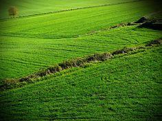 Green lands / Campos verdes