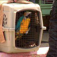 100 birds seized from a nonprofit in Ohio Ohio Birds, Cockatiel, Humane Society, Amazons, Parrots, Bible, Christian, Women Riders, Biblia