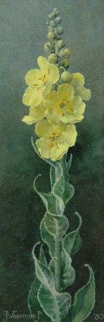 Jan Voerman jr. (1890-1976) - Verbascum, 1960, oil on canvas, 30 x 10,2cm.