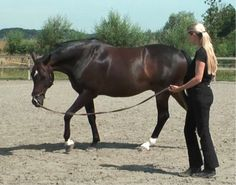 LongeingLongeing consists of different exercises. The end result of performing these longeing exercises is a well-moving horse prepared for riding. Read more about the different longeing exercises and the 14 characteristics of a well-moving horse on my website.