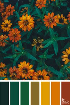 Color Inspired Palette by Tracey Bureau Color Schemes Colour Palettes, Room Color Schemes, Colour Pallette, Autumn Color Palette, Orange Palette, Orange Color Palettes, Bedroom Paint Colors, Paint Colors For Living Room, Pantone