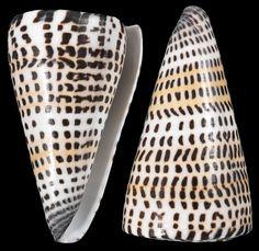 Letter Cones