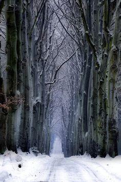 """Snow Forest, Czech Republic photo via retirement"" I've never had a white winter~ Winter Forest, Winter Szenen, Snow Forest, Winter Magic, Winter Road, Forest Path, Winter Walk, Dark Forest, Beautiful World"