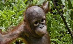 PETITION: Stop Rainforest Destruction