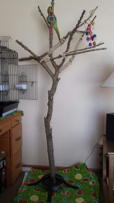 Home made parrot stand. Using Christmas tree stand.