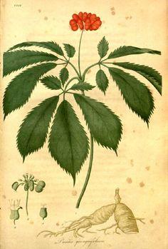 Adaptogeny czyli zioła podnoszące odporność.