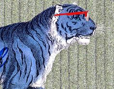 """Check out new work on my @Behance portfolio: """"Blue Bengal"""" http://be.net/gallery/54007445/Blue-Bengal"""