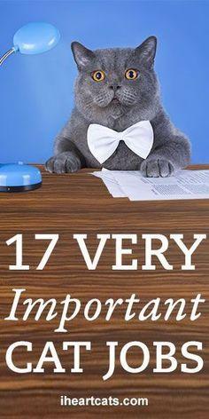 17 Very Important Cat Jobs