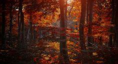 Forêts Automne Arbres Nature