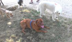 14/07/2015 - Torino con Billo, Temi e Oscar