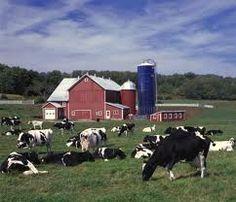 Dairy Farm - If you like cows, then you should try my latest e-release, Milk Money. It's a great Christian romance that I'm sure you'll love: http://www.amazon.com/Milk-Money-ebook/dp/B007AV2KUU/?ref=sr_1_4=UTF8%3D1340288604%3D8-4%3Dcecelia+dowdy