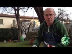 Potatura delle Rose: La Pratica - YouTube Youtube, Green, Plants, Case, Terrazzo, Outdoor Living, Gardening, Flowers, Outdoor Life