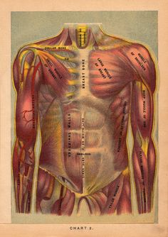 Anatomical Flap-Up Illustrations from 1901 Adapted as Animated GIFs | Brain Pickings