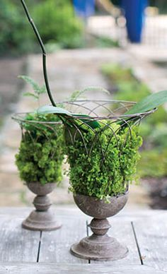 Get creative with this wire garden urn. Add moss and plants for a natural centerpiece, or decorative balls or fruit for something colorful. The urn is made of metal in French wire terrace pattern with a rust finish. It is 14 inches tall, 10 inches wid Garden Urns, Moss Garden, Succulents Garden, Planting Flowers, Flowering Plants, Air Plants, Cactus Plants, Wood Planter Box, Urn Planters