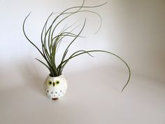 This cheerful little owl with air plants growing out of his head. | 19 Tiny Plants To Cheer Up Your Sad Work Desk