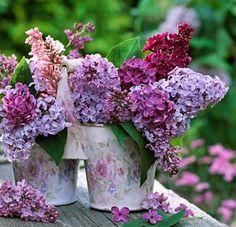Brabourne Farm: Purple