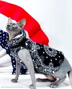 MSHO cat hoodie Boho Bella Black Bandana Sphynx by SimplySphynx