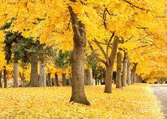 Yellow Autumn Wonderland by Carol Groenen, via fineartamerica.com