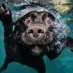 """darling it's better, down where it's wetter take it from meeee. Under the sea"" Dogs underwater"