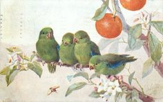 four green finches, with blue wings, on orange tree - Art by A. Vintage Birds, Vintage Prints, Vintage Art, Tree Bees, Bird Tree, Decoupage, Birds And The Bees, Blue Wings, Tropical Birds