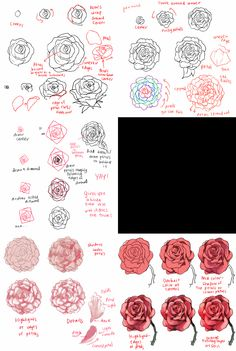 Art and Reference point http://anatomicalart.tumblr.com/post/96404894697/kelpls-there-are-different-kinds-of-peonies-idk