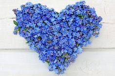 heart made of forget-me-not flowers on white wooden background by olacrima.08