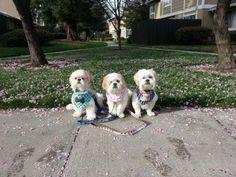 Mr MaGoo, Carla Mae and Mini Me under cherry tree