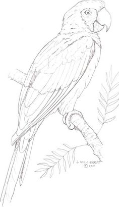 Painting Bird Coloring Pages 67 Ideas Bird Drawings, Pencil Art Drawings, Art Drawings Sketches, Animal Drawings, Easy Drawings, Drawing Animals, Realistic Drawings, Animal Paintings, Parrot Drawing