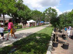 Bike Trail Spring Fever, Bike Trails, Winter Garden, Dolores Park, Sidewalk, Bloom, Florida, Travel, Viajes