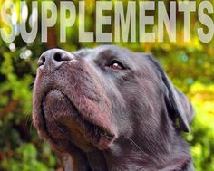 Supplements Useful For Kidney Failure Dogs