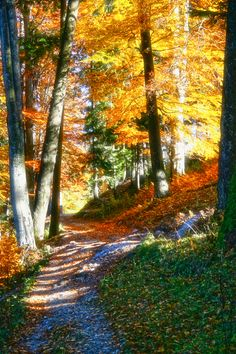 #autumn #leaves | Pin by @GuessQuest