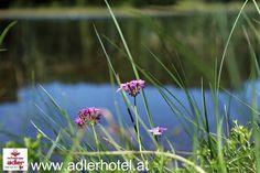 Der Sommer hat auch in Nauders Einzug genommen Plants, Collection, Eagle, Vacation, Summer, Plant, Planets