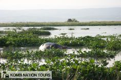 Hippo Pool on Lake Albert! For more information on Uganda's National Parks and Reserves, please visit our website.